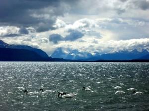 Patagonia  - Swans 1 Restored 1